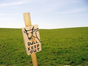 bull-keep-out-1390792